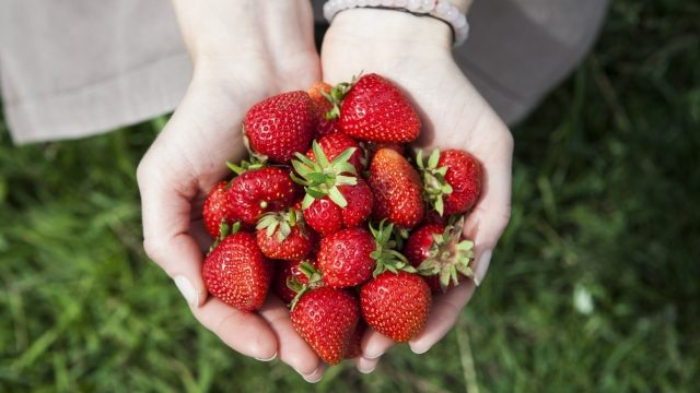 あさイチ 甘いイチゴを選ぶコツ